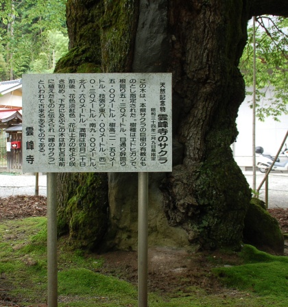 120714sakura02unpoji.jpg