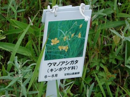 130615umanoashigata02.jpg