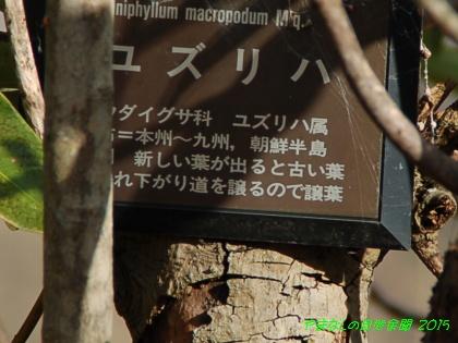 150124yuzuriha03.jpg